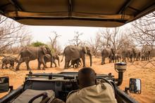 Observing Elephants Crossing T...