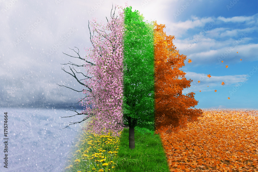 Fototapety, obrazy: Four season tree