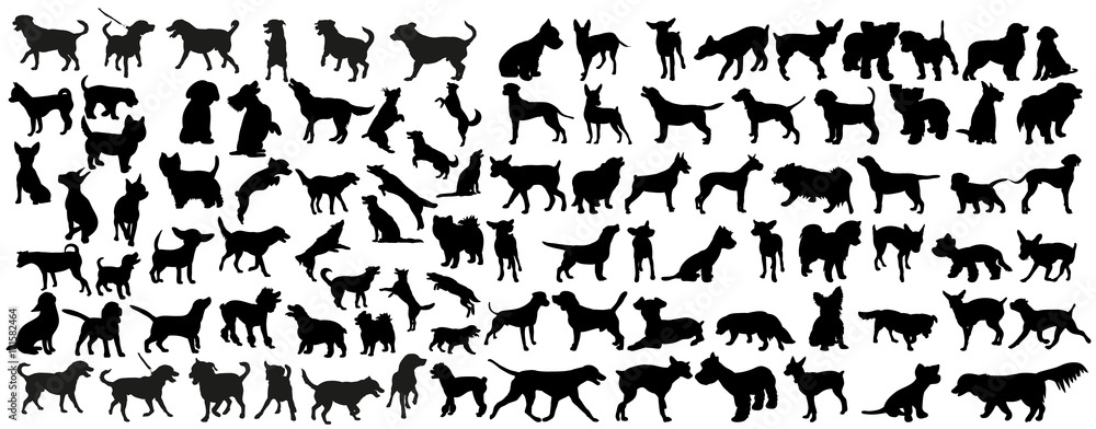 Fototapety, obrazy: vector, isolated black silhouette of a dog, collection