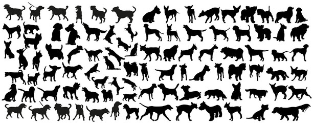 Fototapetavector, isolated black silhouette of a dog, collection