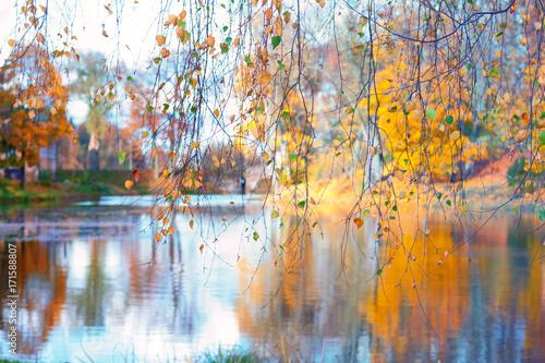 jeziora-przez-galezie-brzozy
