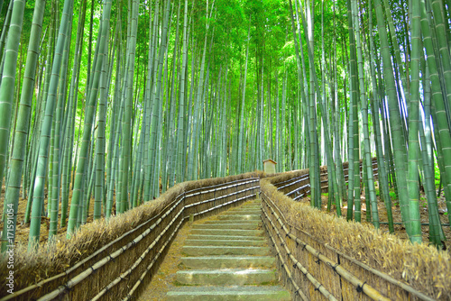 Foto op Canvas Bamboo 竹林の小道