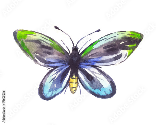 Ornithoptera alexandrae watercolor, butterfly Canvas Print