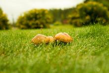 Autumn Mushrooms Grass Raindrops