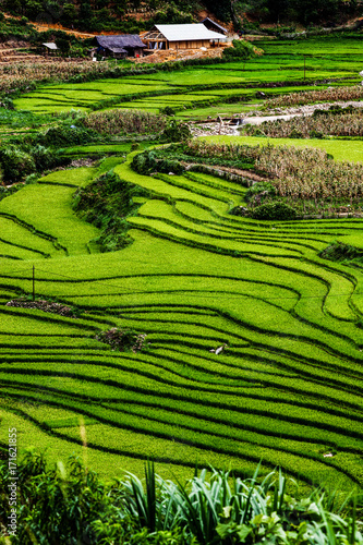 Fotobehang Rijstvelden green paddy fields around Ma Tra village in the summer, Sa Pa, Vietnam