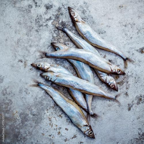 Fresh catch Shishamo fish fully eggs   Shishamo fish is popular fish