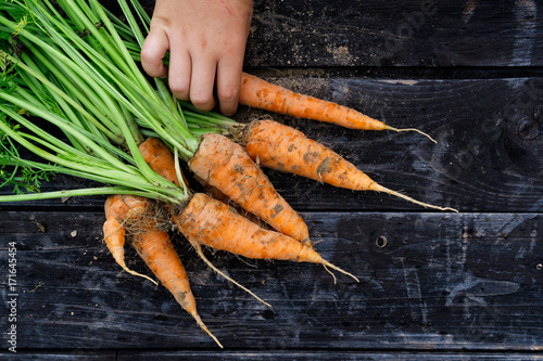 Freshly harvested bunch of carrots on rustic dark wood from above. Child's hand. Space for text.