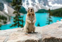 A Standing Chipmunk At Moraine Lake