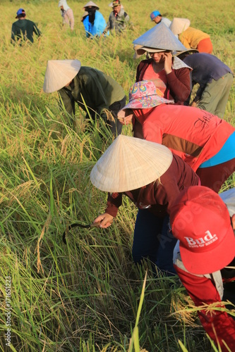 Valokuva Farmers working in rice fields in rural landscape.