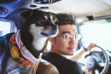 Dog And Man In The Car