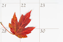 Autumn Leaf On A Calendar For The First Day Of Fall With Copy Space