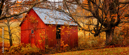 Obraz Autumn landscape with little red barn. Colorful orange and yellow fall leaves. Banner format - fototapety do salonu