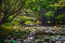 Bangkok City: King Rama IX Park (Suan Luang), Botanical Garden & Park, A Bangkok Must-see. Evergreen Nature Landscape After Rain: Creeper Twined Bridge, Trees Over Water, Lotuses, Bamboo