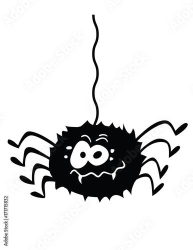 Fotografie, Obraz  funny spider!