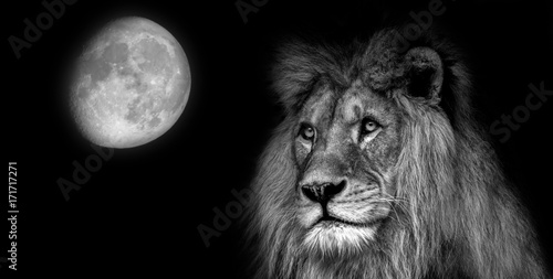 Staande foto Buffel Black and white portait lion with moon