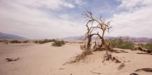 Dead Tree At Desert In Dead Va...