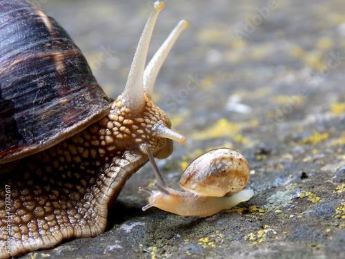 small and big snail on concrete
