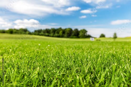 Fototapeta premium Zielone pole golfowe z błękitnego nieba.