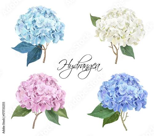 Valokuva Hydrangea realistic illustration set