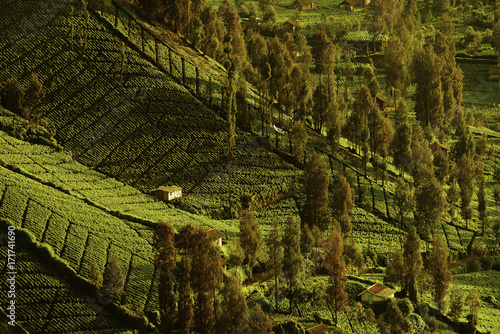 Tuinposter Wijngaard Farming land covered with trees near Mt Bromo volcano, Indonesia