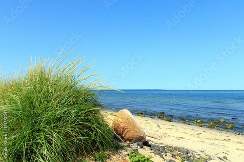 Fényképezés  Green dune grass on the beach, Montauk Point, Long Island, New York