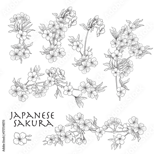 Tableau sur Toile Branch of cherry blossoms, japanese cherry. Stock line vector il
