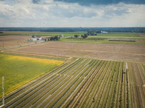 Fotografie, Obraz  Aerial of Farmland