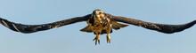 Hawk - Soar