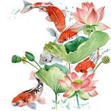 watercolor koi carp and lotus flower illustration. - 171773262