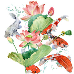 Obraz watercolor koi carp and lotus flower illustration.