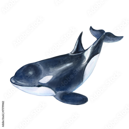 Foto op Aluminium Dolfijn Killer whale isolated on white background. Black fish or grampus. Watercolor. Illustration. Picture