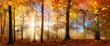Die Sonne scheint durch Nebel in einem goldenen Wald im Herbst