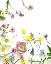 沢山の春の花の花びら、白背景、背景素材、ナチュラル