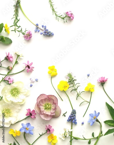 可愛い春の花の花びら、白背景
