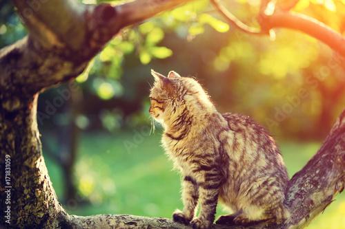 Plakat Śliczny kot siedzi na gałąź drzewo w ogródzie przy zmierzchu światłem