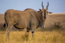 Masai Mara, Kenya, Sep 2016