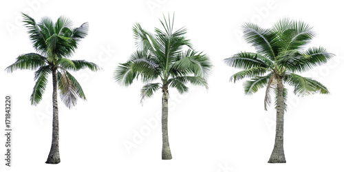 Deurstickers Palm boom Set of coconut tree isolated on white background used for advertising decorative architecture. Summer and beach concept