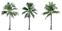 Set Of Coconut Tree Isolated O...