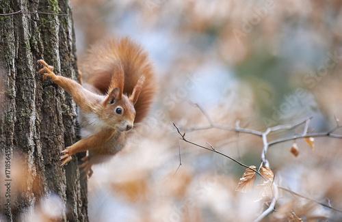 Deurstickers Eekhoorn Eichörnchen vor herbstlichem Hintergrund