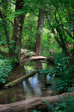 Creek And Wood At Roman Nose S...