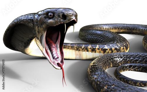 Naklejka premium 3d King Cobra Najdłuższy na świecie jadowity wąż na białym tle, King Cobra Snake, ilustracja 3d, renderowanie 3d