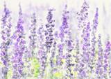 Lavender field. Watercolor bacground. - 171897844