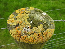 Fence And Lichen