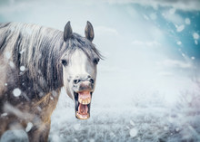 Funny Smile Horse Face At Winter Nature Background With Snow Fall