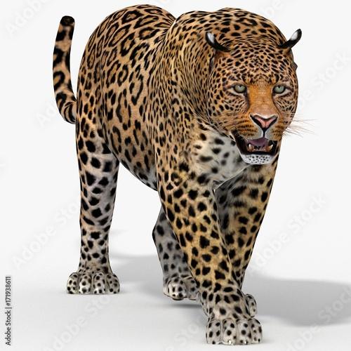 Plakat Leopard (3d)