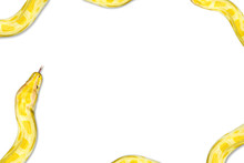 Closeup Gold Python,Reticulate...