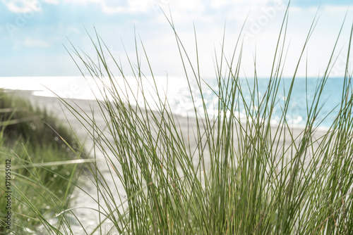 Beach grass on coastal dunes in the northeastern german region fish land located in the federal state Mecklenburg Vorpommern Canvas-taulu