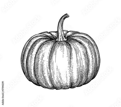 Fotografia Ink sketch of pumpkin.