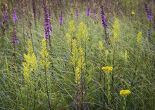 Native Wildflowers And Prairie...