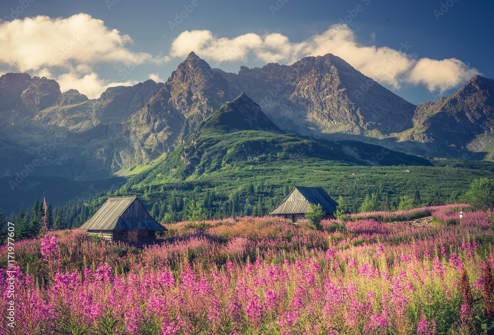 Fototapety, obrazy: Tatra mountains, Poland landscape, colorful flowers and cottages in Gasienicowa valley (Hala Gasienicowa), summer